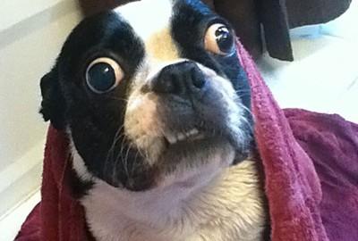 Imagem da notícia: Já conhece o cão com os maiores olhos do mundo?