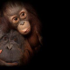 Imagem da notícia: Opticalia apoia diferentes causas sociais e ambientais